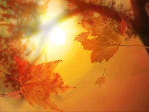 Осенний кариес