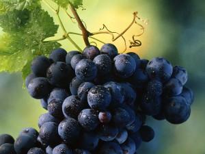 Виноград для всей полости рта